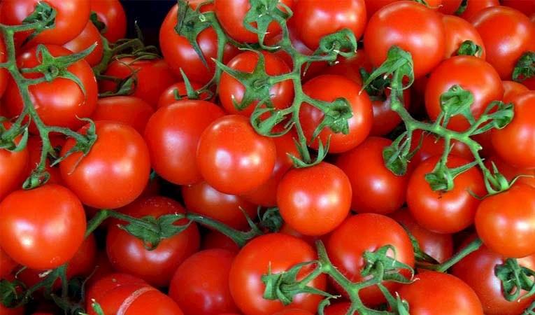 Rusya'ya domates ihracatı için tarih
