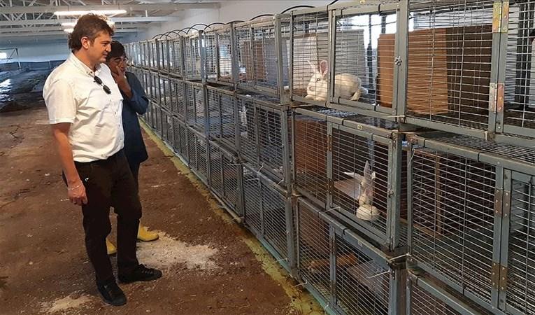 Türkiye'nin ilk tavşan üretim çiftliği : Gıda ve sağlık ürünlerinde kullanılacak