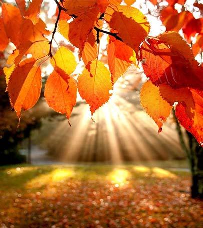 sonbahar ile ilgili görsel sonucu